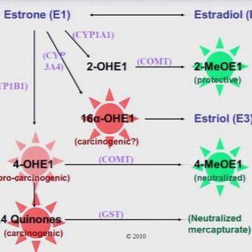 Mutaţiile genetice, trombofiliile şi Endometrioza – Partea I